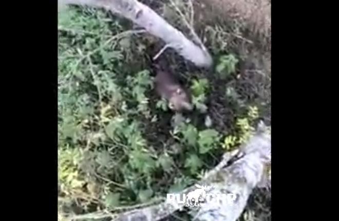 Кричал на медведя, но это не помогло