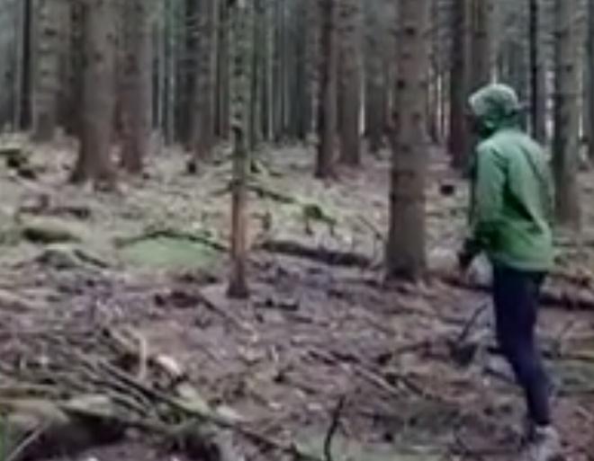 Неудачно сломал дерево