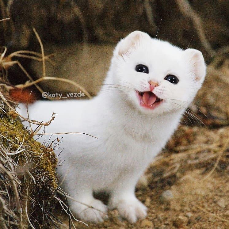 Котов