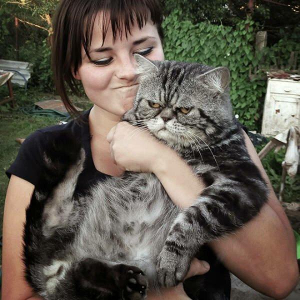 Коты, которые не любят делать селфи