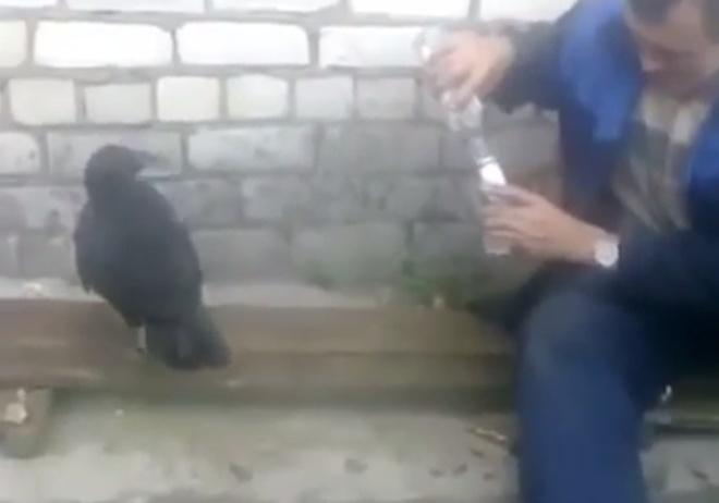 Пернатый собутыльник