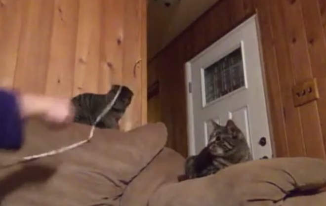 Коты бывают двух типов