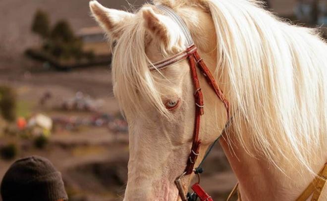 Животные-альбиносы, которые удивят вас своей внешностью