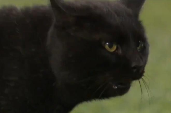 Черный кот стал звездой футбольного матча