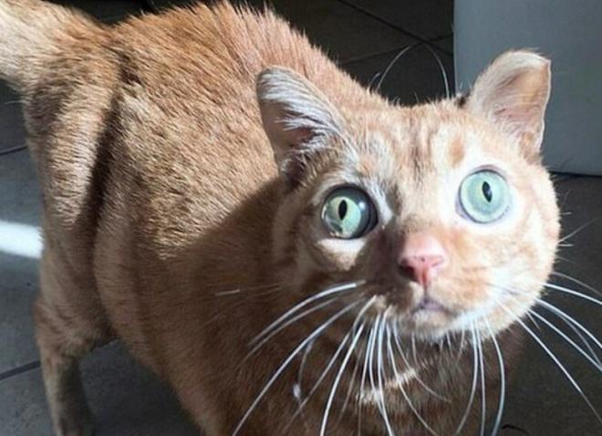 Потейто: кот, ставший звездой благодаря своим глазам необычно большого размера