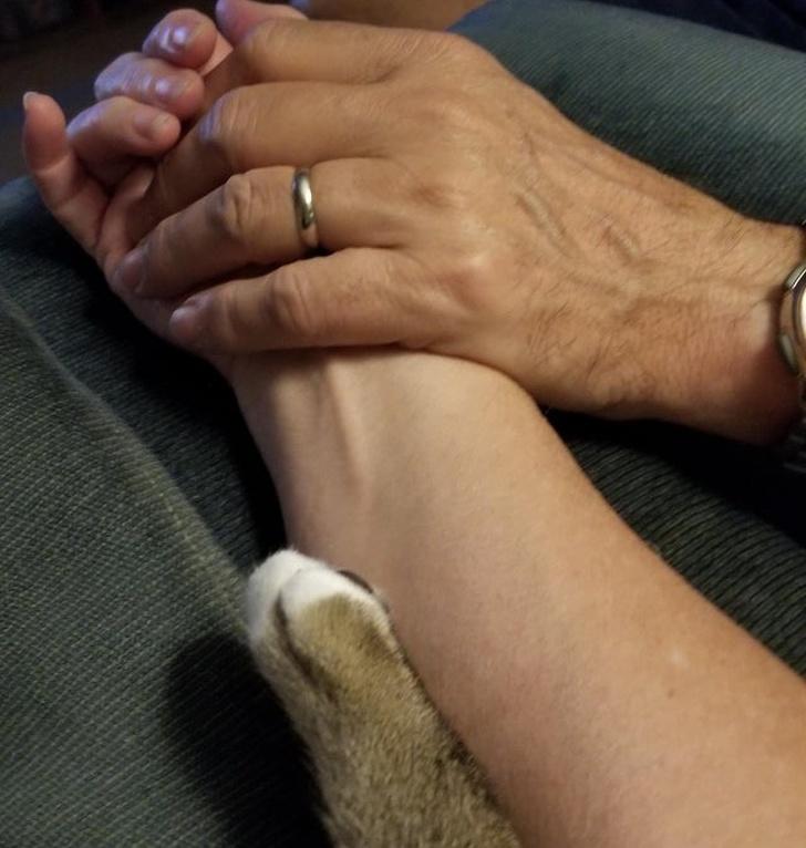 Доказательства того, что домашние животные - это полноценные члены семьи