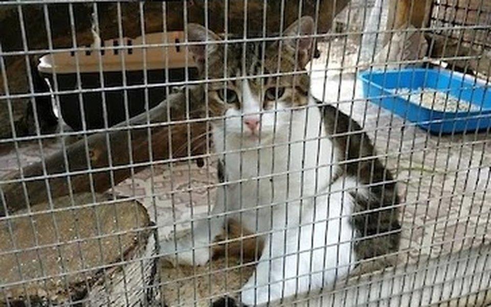 В суде сбежавшего кота наркокурьера пытались подменить похожим
