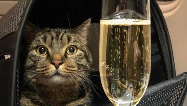 Толстый кот Виктор получил щедрые подарки