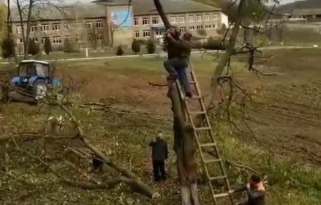 Срубая дерево, помни о технике безопасности
