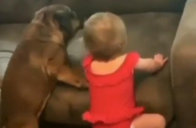 У пса и ребенка обнаружилась общая проблема