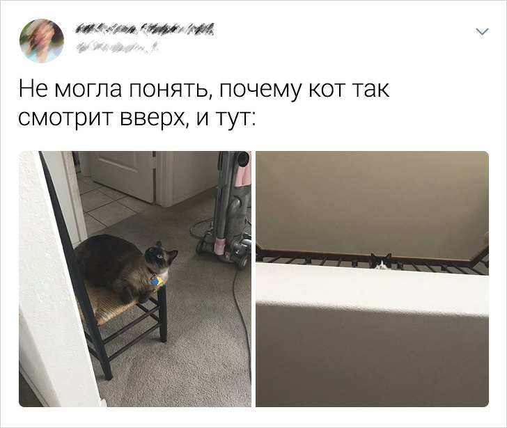 Подборка забавных твитов про котиков