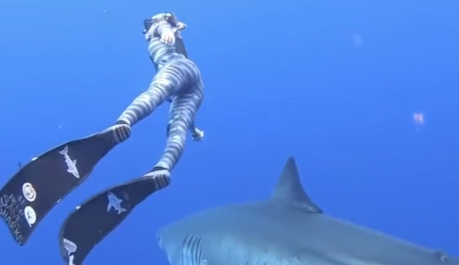Дайвинг с огромной акулой