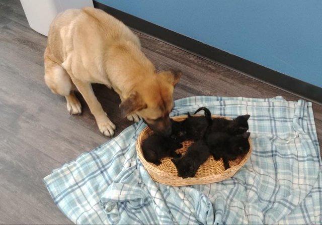 Бездомная собака спасла пятерых котят от смерти на морозе.