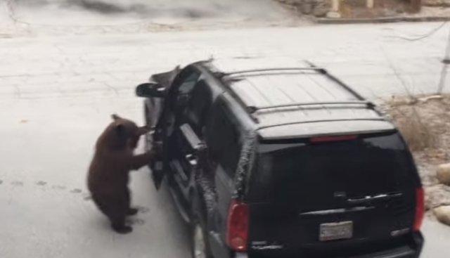 Медвежонок решил угнать внедорожник?