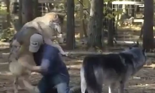 Борьба с волками