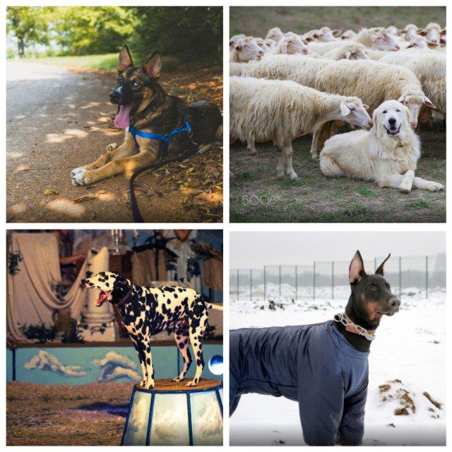 Профессии маленьких и больших собак