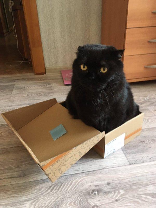 Тред в Твиттере: коты и коробки созданы друг для друга