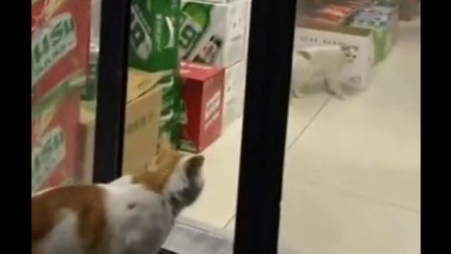Коты спланировали и устроили ограбление