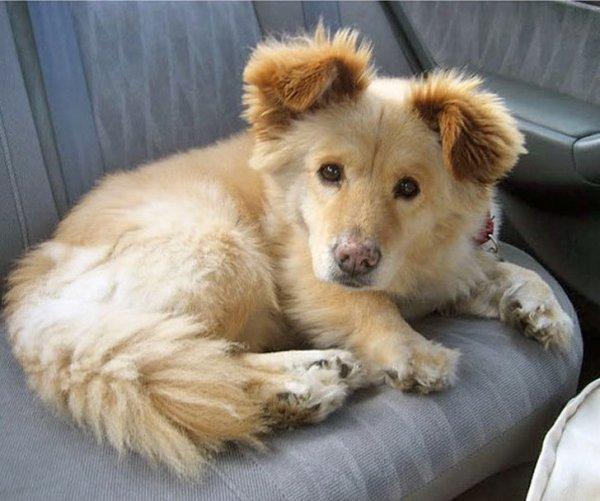 Необычные гибридные породы собак