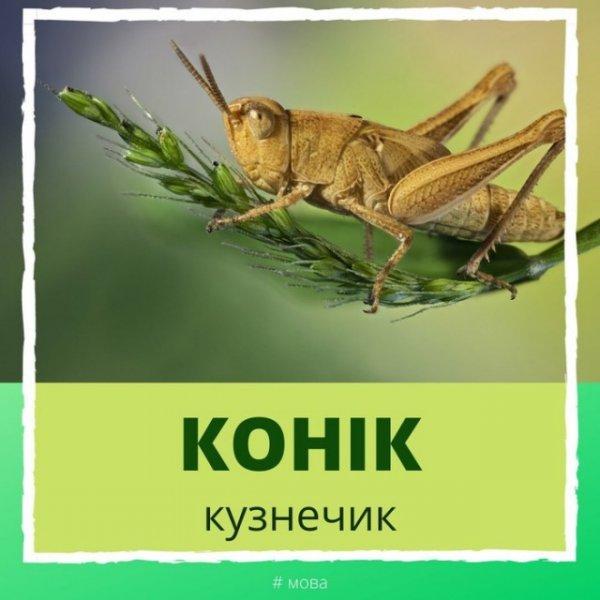 Очаровательный и забавный белорусский язык