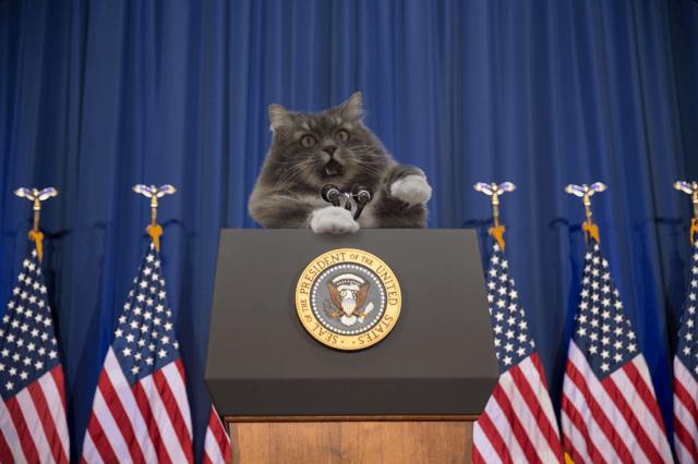 Кот очень хотел попасть домой, а в итоге стал мемом