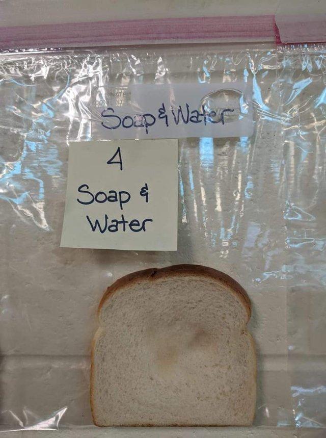 Американским школьникам на примере хлеба объяснили, зачем мыть руки