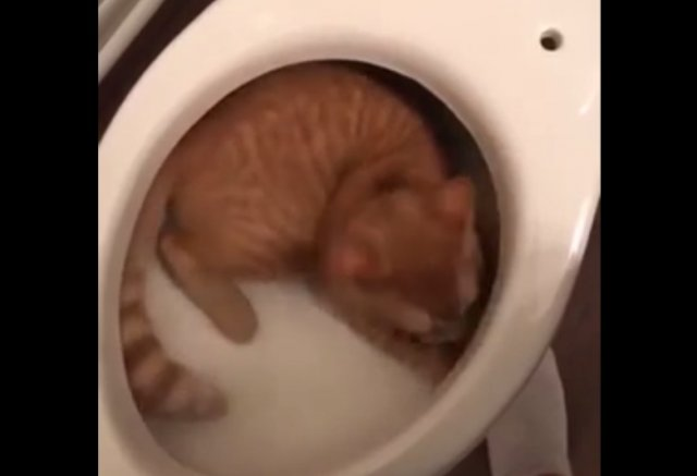 Кот залез куда не следовало