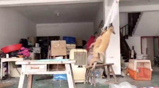 Собаки нашли для себя странное развлечение