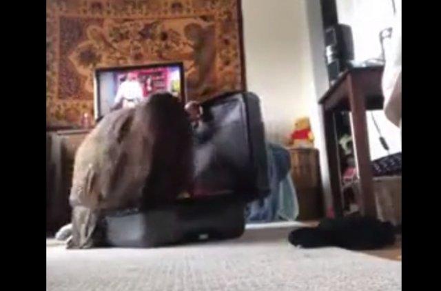 Коту не понравилось занятие хозяйки