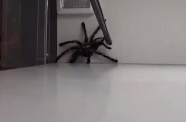 Как поймать паука? Никак.