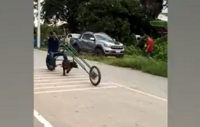 Довольно необычные гонки