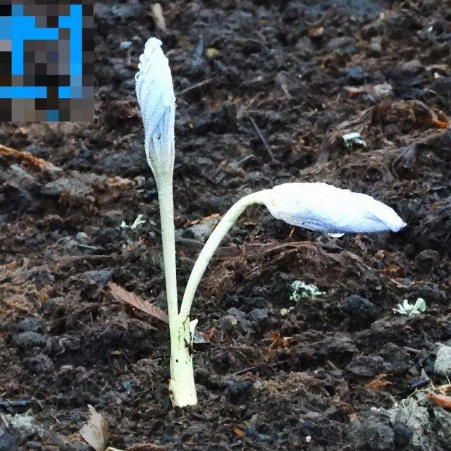 В Петербурге в середине января цветут цветы, распускаются деревья и летают бабочки