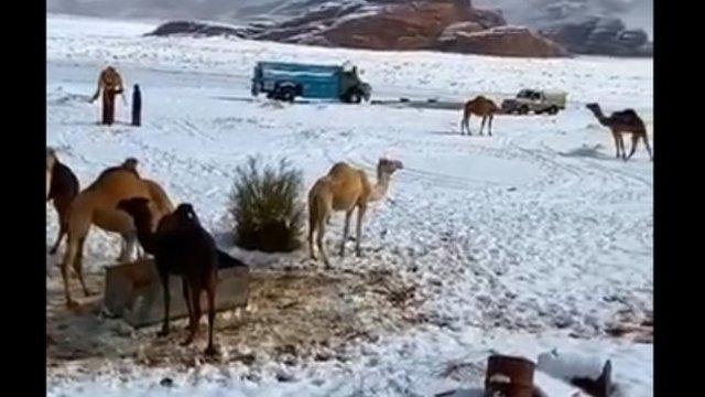 Верблюды в шоке: в Саудовской Аравии выпал снег