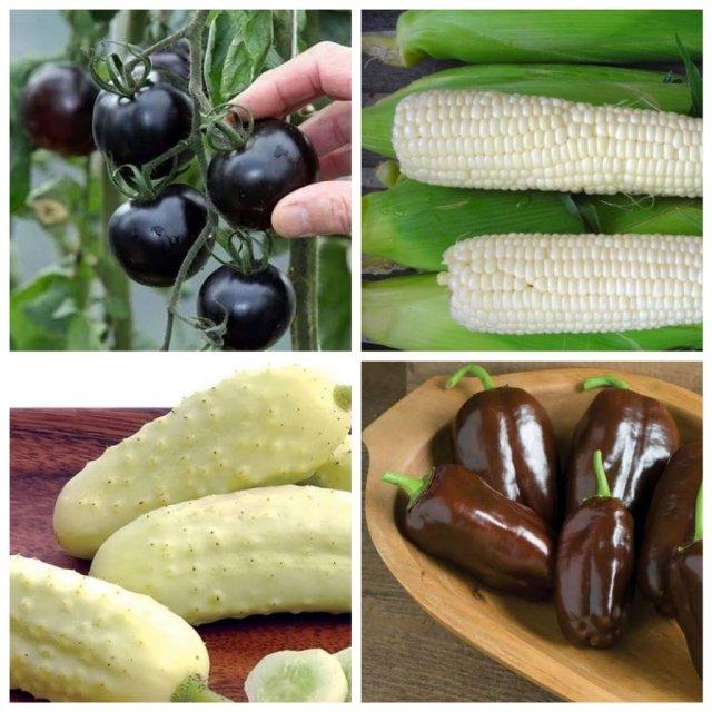 Любимые овощи в необычном цвете