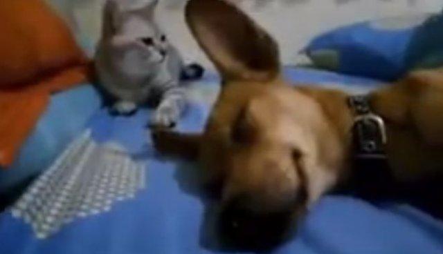 Кот наказал собаку за некультурную выходку