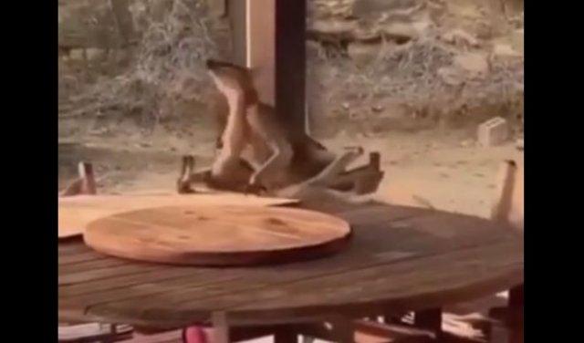 Обычная ситуация для австралийского бара