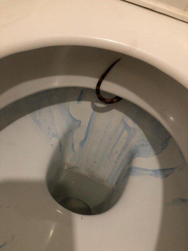 Жительницу Тулы шокировал сюрприз в уборной