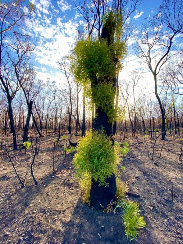 Природа Австралии начала восстанавливаться после пожаров