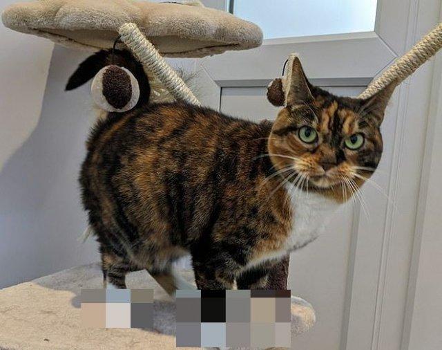 Многопалая кошка покоряет сотрудников приюта и пользователей в социальных сетях