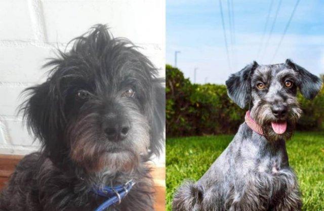 Чилиец выхаживает бездомных собак и показывает, как они меняются