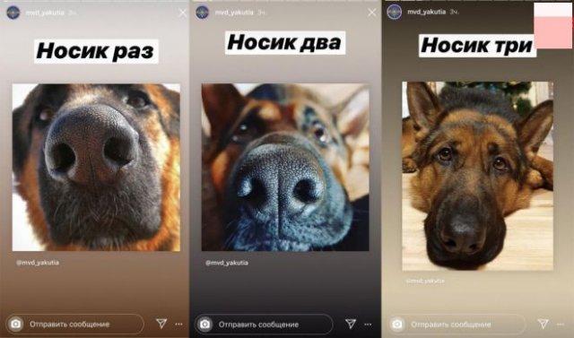 Собаки, котики и селфи: пресс служба МВД Якутии изменила подачу материала
