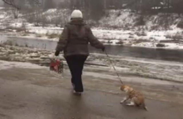 В Боровичах неадекватная женщина издевалась над котом, таская его по грязи на поводке