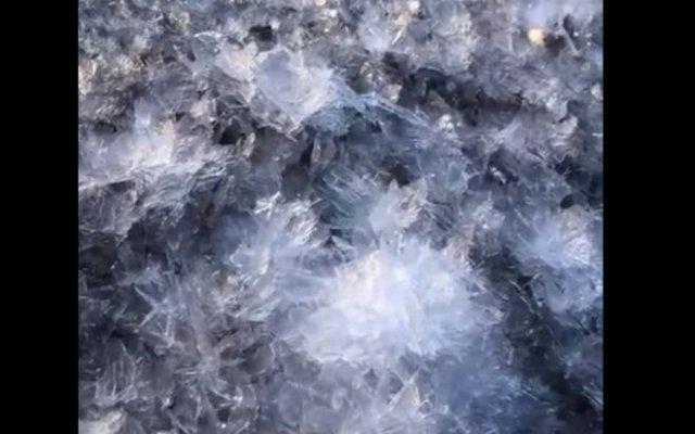 Ледяные цветы: на берегу Финского залива сняли необычное природное явление
