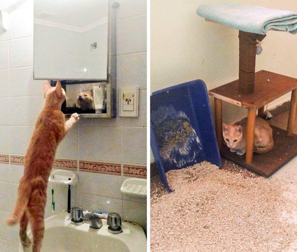 Безумные проделки от смекалистых котиков