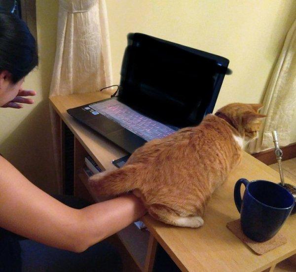 Коты-наглецы, которые регулярно устраивают хозяевам тест на прочность нервов