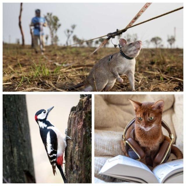 Удивительные факты о животных (9 фото)