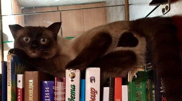 Валентинка от кота