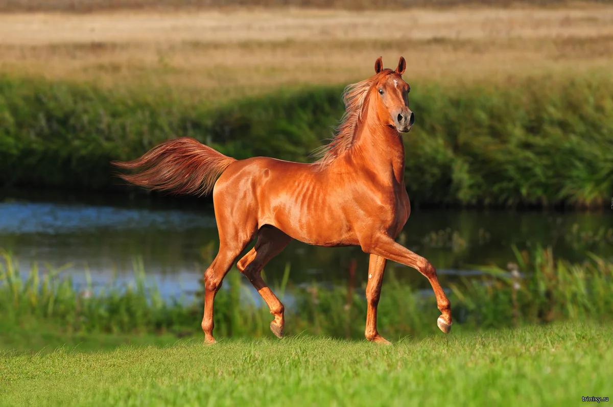 Подборка интересных и необычных фактов о лошадях