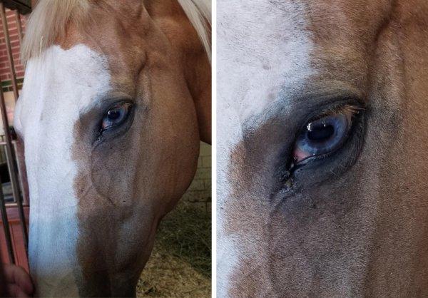 Голубоглазая лошадь