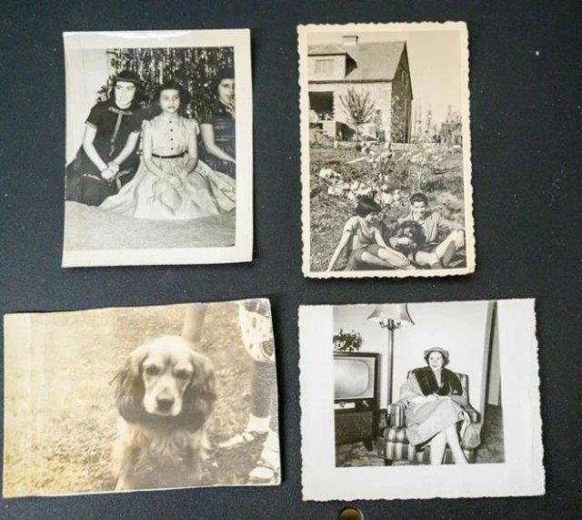 Фотографии родных и любимой собаки